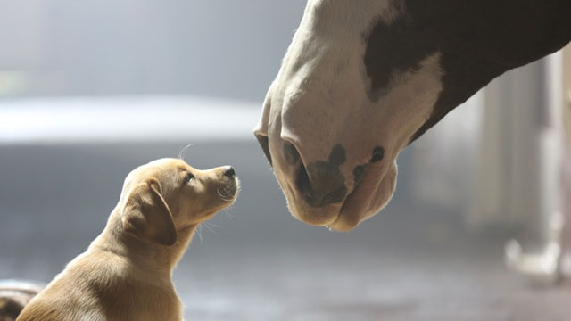 The+Best+%28and+Worst%29+Super+Bowl+Ads