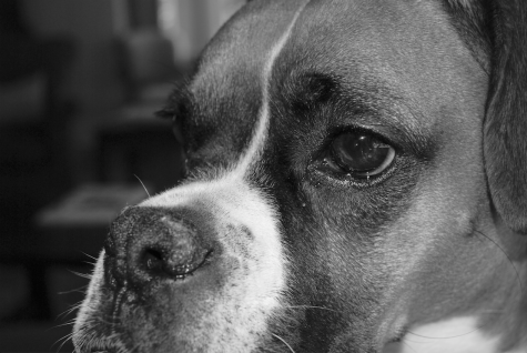 Photojournalism essay: Animal abuse and animal rescue