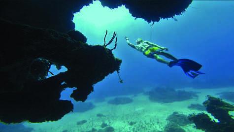 free dive copy