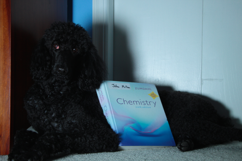 A dog and an AP Chemistry textbook - the yin and yang of stress (relief).