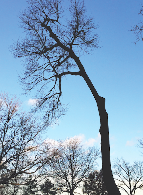 Barren trees signal the transition to cold weather, and for some students, their mood suffers