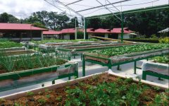 Smaller scale gardens that grow herbs and vegetable are an excellent way to avoid the problems of imported crops.