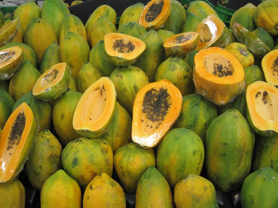 In the late 1990s, the papaya ringspot virus almost wiped out the entire crop, until Cornell University scientists created the virus-resistant Rainbow papaya. The fruit is still enjoyed today because of genetic modification.